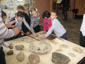 IMG 0032 300x224 Палеонтологический музей