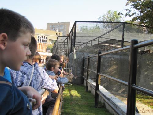 IMG 6776 500x375 Учебный день в Московском зоопарке